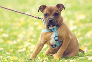 狗狗被烫伤正确处理方法